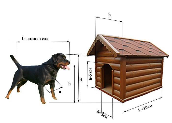 Будка для собаки своими руками: планировка, размещение, чертежи, изготовление