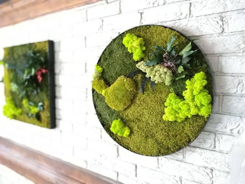 Украшение интерьера живыми картинами, панно, стенами: мох и суккуленты