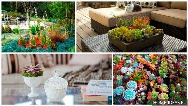 Композиции из суккулентов (34 фото): мини-садики из кактусов. как создать сад в одном горшке? как сделать новогодние композиции в стекле?