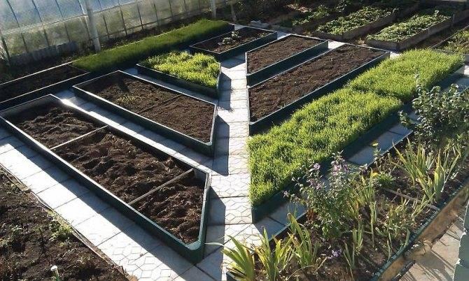 Сажаем картофель: расстояние между рядами и кустами, ширина борозд, план