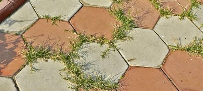 Как избавиться от травы на садовых дорожках быстро и навсегда как избавиться от травы на садовых дорожках быстро и навсегда