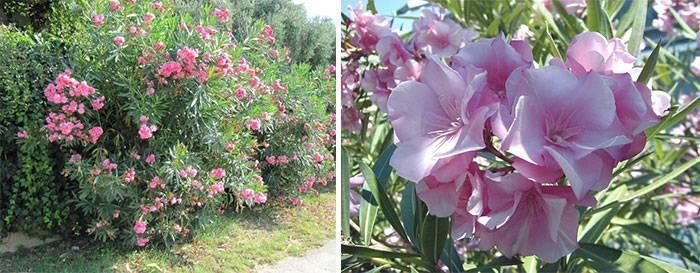 Определить южных цветов по фото: что растет на юге?