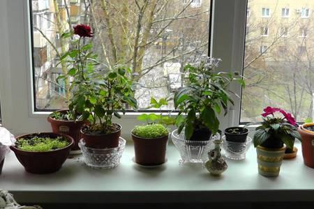 Почему потеют пластиковые окна: конденсат на окнах внутри квартиры, дома