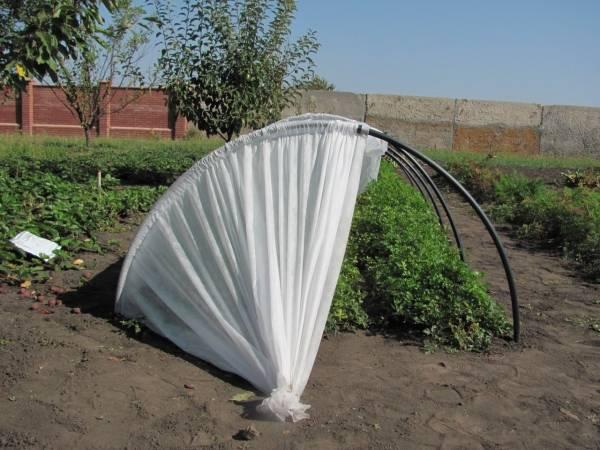 Парник «подснежник» (51 фото): урожайные теплицы мини и других размеров от «башагропласт», ставим своими руками , отзывы покупателей