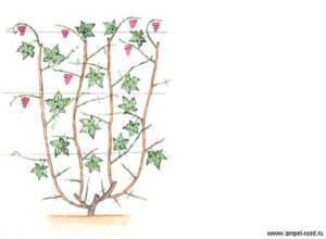 Беседка для винограда своими руками из металла: чертежи, схемы и фото