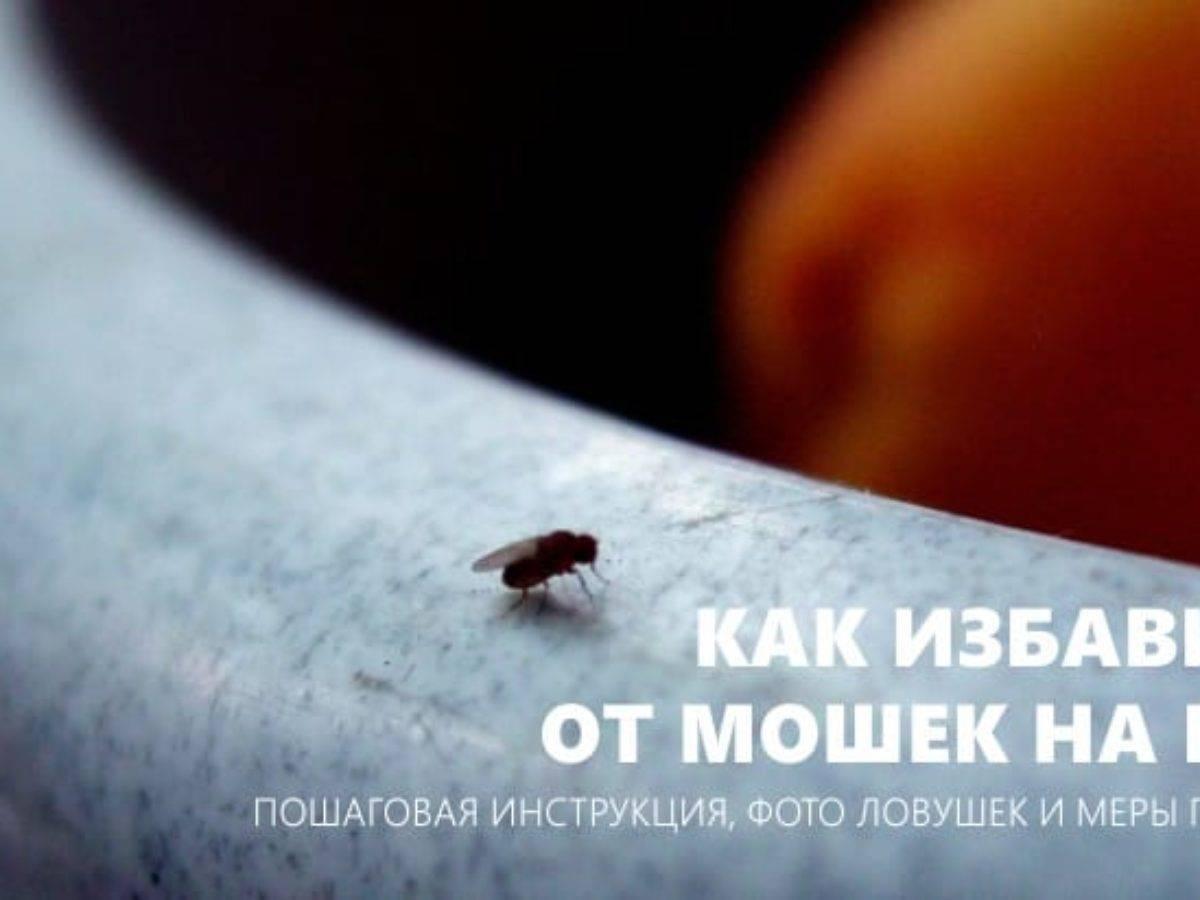 Как избавиться от мошек в квартире, на кухне: виды мушек и откуда они берутся, сколько живут и чего они боятся, средства для выведения.