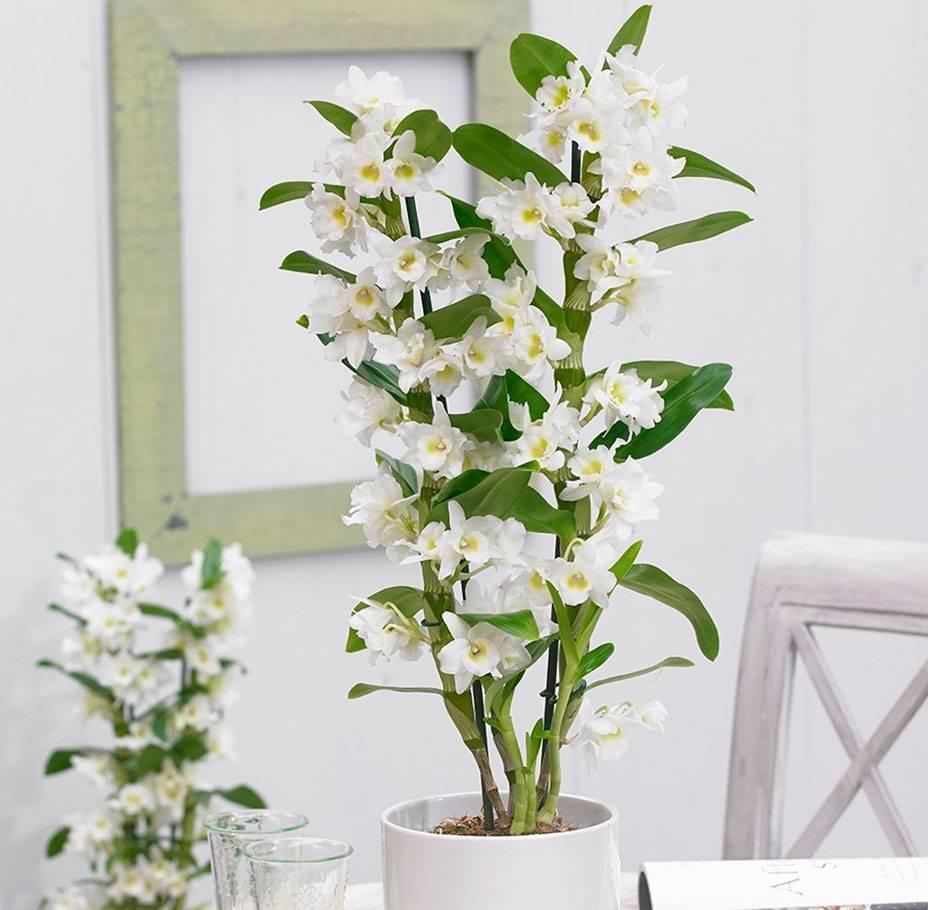 Уход за орхидеями в домашних условиях: как правильно ухаживать за этими комнатными цветами, всё про их болезни, содержание, разведение, подкормку, разновидности, а также фото и видео для начинающих