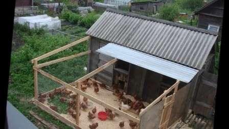 Мини-курятник (62 фото): чертежи небольших конструкций на 5 кур, как построить загон на даче своими руками