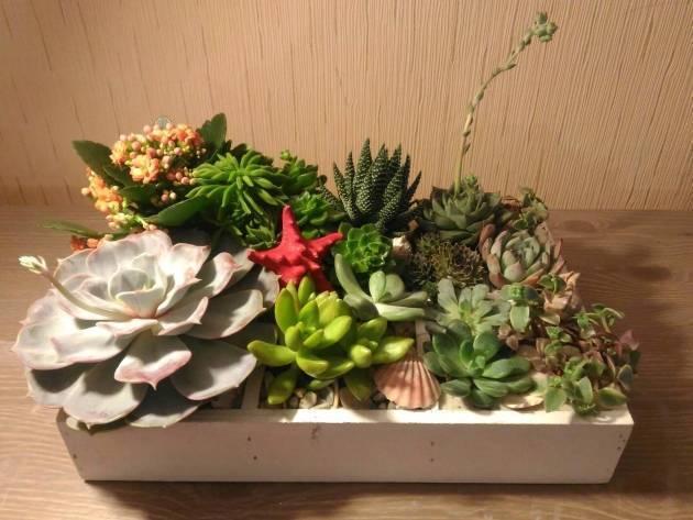 Нецветущие комнатные растения: разновидности и правила ухода