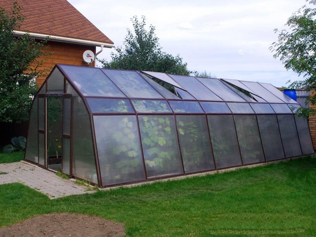 Теплицы glass house: модель «березка», отзывы
