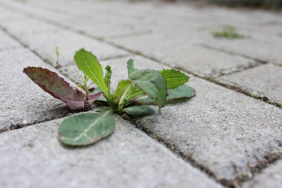 Как избавиться от травы на садовой дорожке