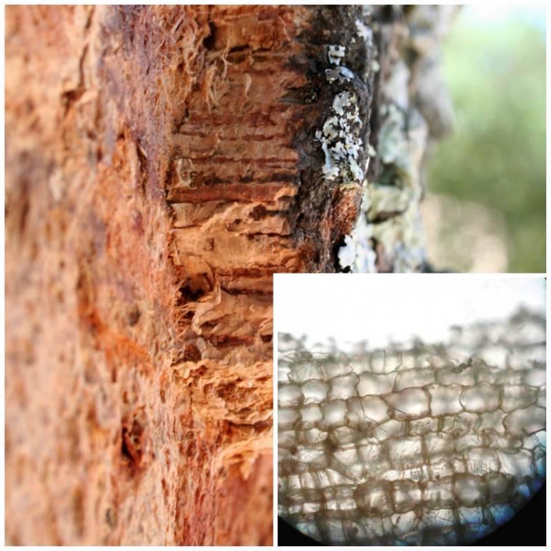 Пробковый пол - плюсы и минусы, материалы