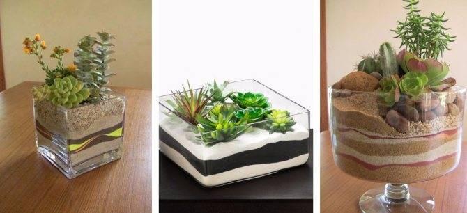Суккуленты - простые и красивые идеи применения в дизайне интерьера и ландшафтном дизайне (120 фото)