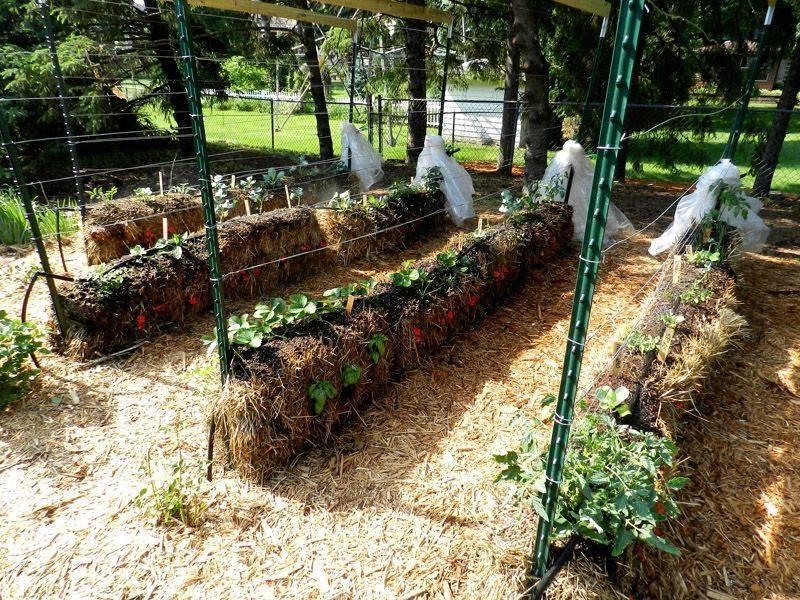 Как правильно сделать грядки на огороде. как делать грядки на огороде