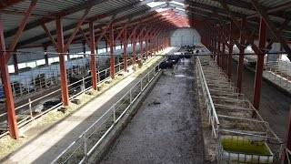 Коровник — типовой проект, размеры, нормы, оборудование для коровников. | cельхозпортал