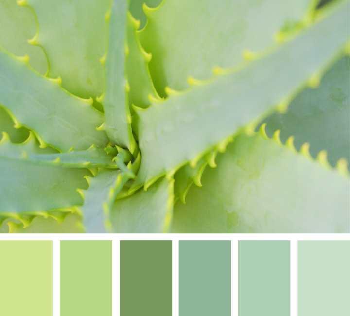 Сочетание обоев двух цветов: фото и правила с примерами и вариантами