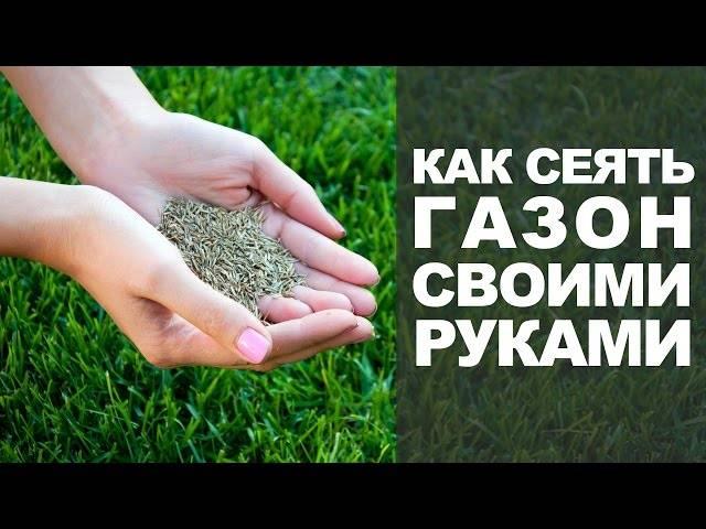 Какую выбрать траву для посадки газона: все, что нужно знать, плюс, примеры на фото