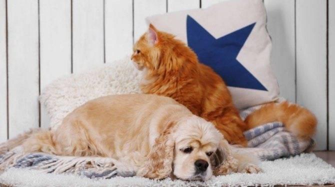 Домик для кошки своими руками: как сделать пошагово? 150+ (фото) из дерева, картона, коробок, с когтеточкой