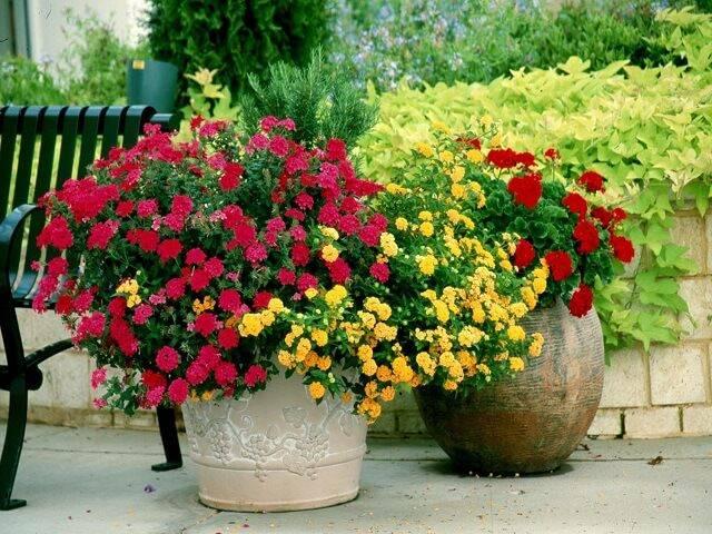 Кашпо для цветов: 195+ (фото) напольных/подвесных/настольных
