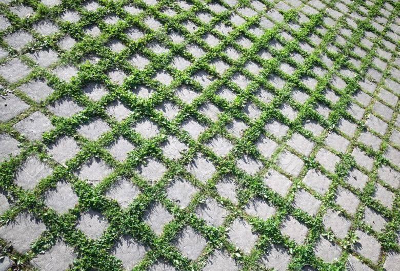 Как убрать траву между тротуарной плиткой с помощью промышленных или народных средств | все актуальные новости