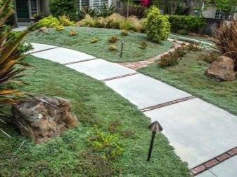 Тротуарная плитка: 70+ фото на дорожках, крыльце, ступеньках, идеи ландшафтного дизайна