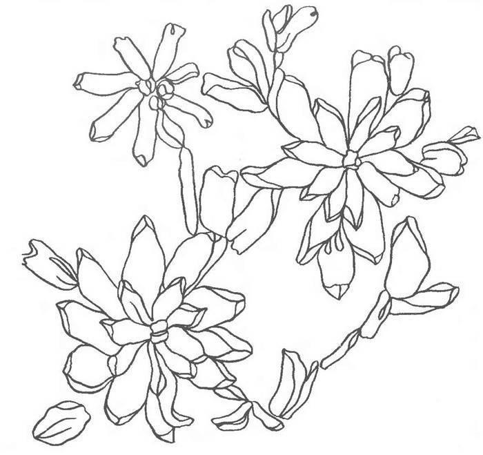Картины квиллинг лучшее. картины в технике квиллинг (фото). как сделать цветы в технике квиллинг. одуванчики