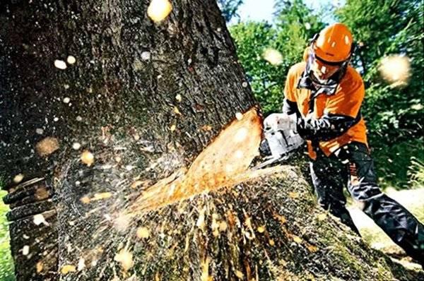 Как пилить бензопилой деревья вдоль бревна: видеоурок