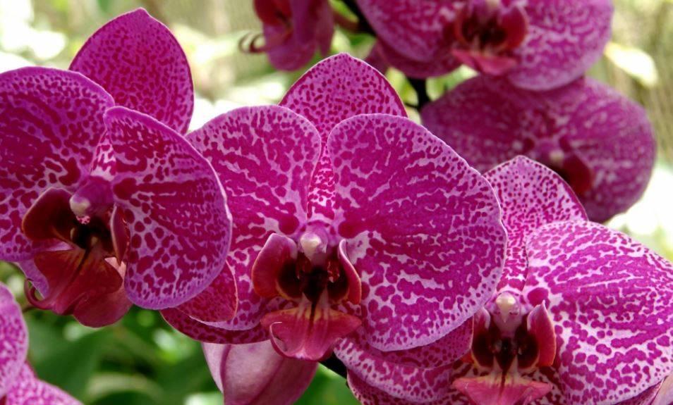 Как правильно посадить орхидею в горшок в домашних условиях: фото и видео от профессионалов