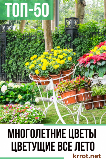 Цветы для клумбы - фото с названиями, каталог многолетних и однолетних цветов