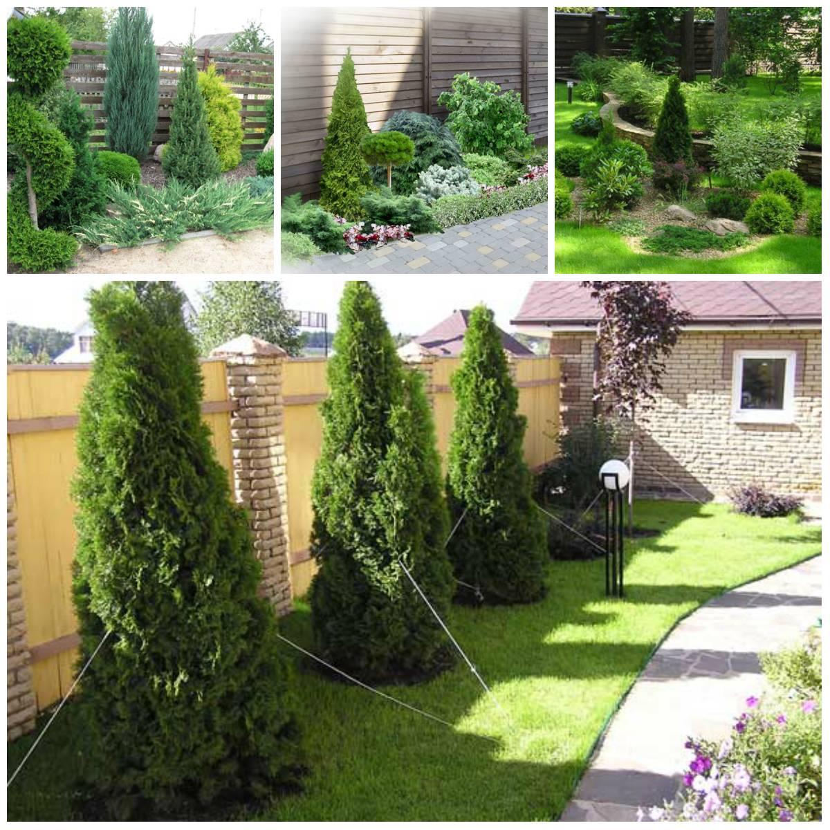 Основные принципы ландшафтного дизайна для начинающих садоводов