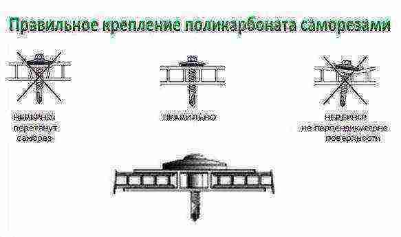 Теплица из поликарбоната своими руками - пошаговая инструкция + фото и видео