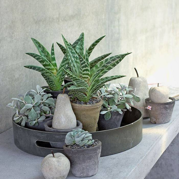 Композиции из суккулентов и кактусов: картина, садик своими руками