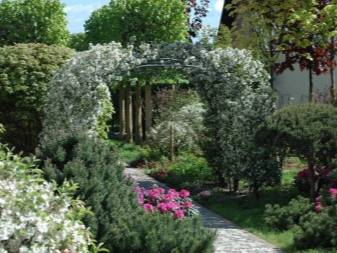 Вьющиеся растения для сада: названия и описания