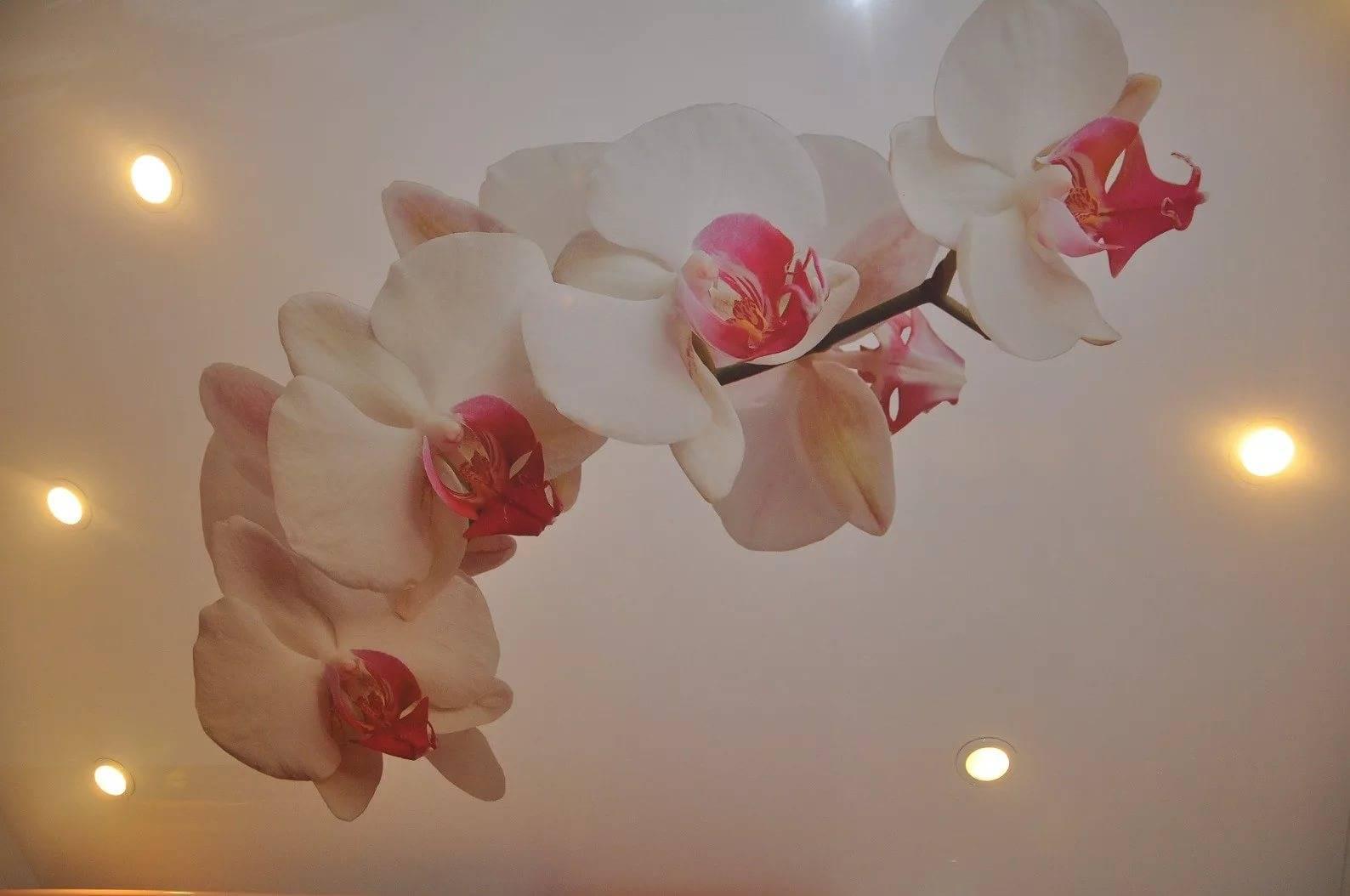 Натяжные потолки с орхидеей: романтичный интерьер в вашем доме