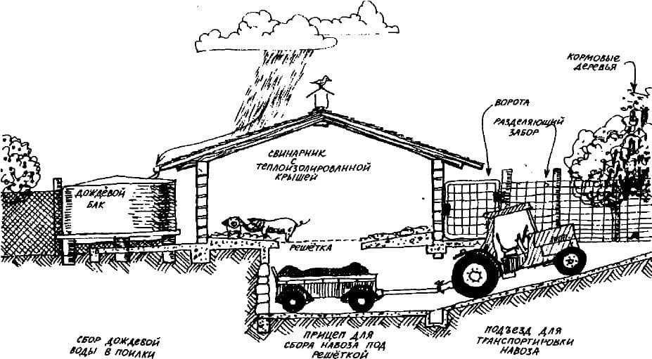 Свинарник своими руками: строительство, устройство