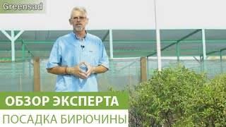 Живая изгородь на даче – своими руками: посадка, уход и стрижка. как вырастить живую изгородь
