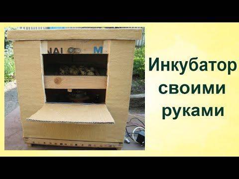 Инкубатор своими руками в домашних условиях из вской всячины
