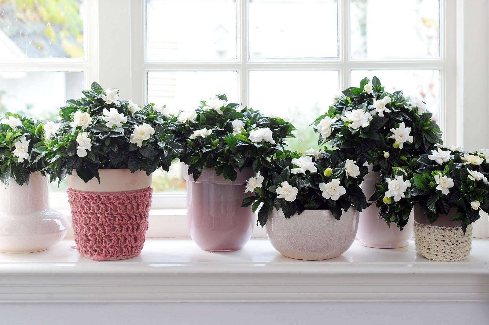 Какие комнатные растения могут принести неприятности и почему их нельзя держать дома?