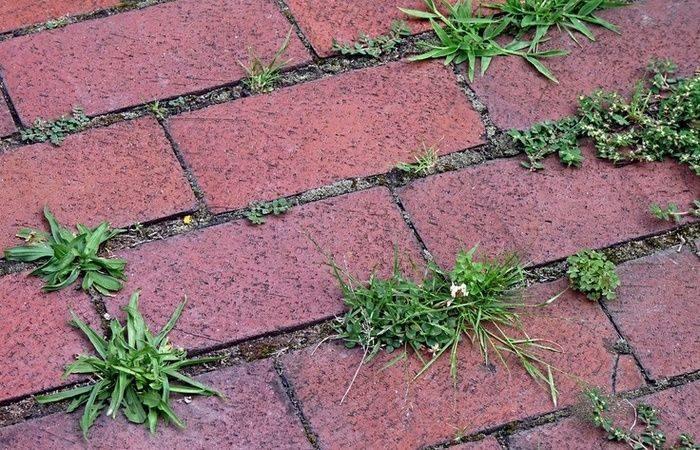 Как избавиться от травы на садовой дорожке – дачные дела