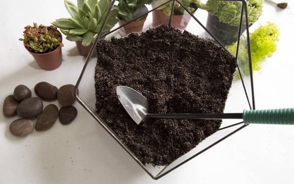 Флорариум: понятие и виды, какие растения и емкости подойдут